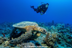 a turtle and a diver in the red sea by Christian Schlamann